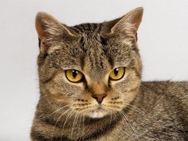 «Немой» кот громко замяукал и спас семью от ужасной гибели