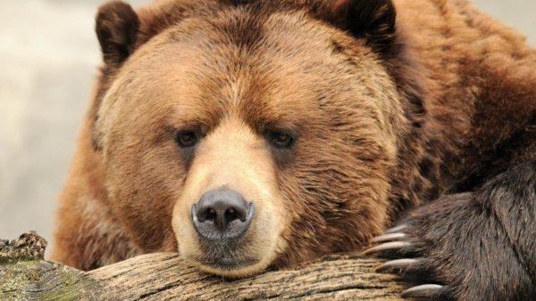Американка отбилась от медведя и 3 км шла с травмой черепа