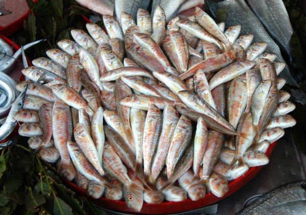 Названы регионы с самой вкусной рыбой