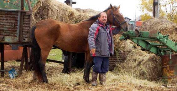 Камчатский депутат станет ездить на работу на лошади из-за цен на бензин