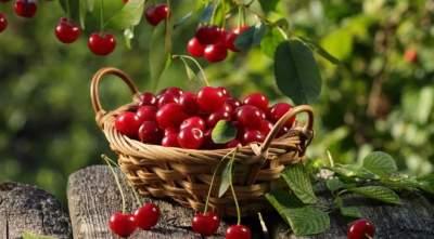 Названы полезные для здоровья свойства вишни