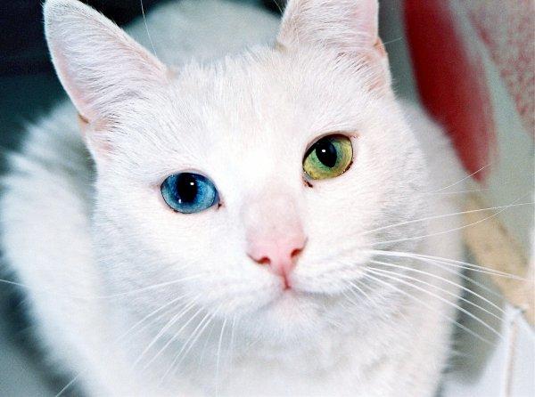 Котёнок-мутант родился в Сыктывкаре с двумя хвостами и шестью лапами