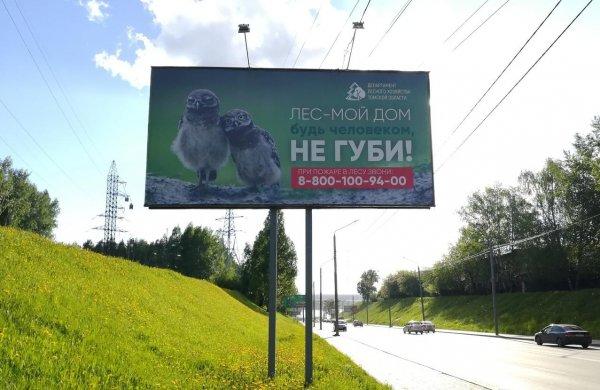 Житель Томска возмущён лицемерием властей по вопросам сбережения леса