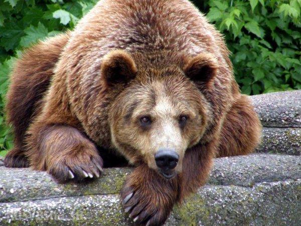 В зоопарке Воронежа показали начало дня для медведицы
