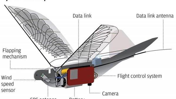 В Китае создали птиц-дронов для слежки за людьми