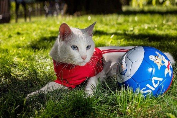 Кот-оракул Ахилл спрогнозировал победу сборной Швейцарии над Швецией