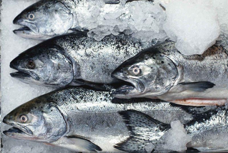 Транспортировка живой рыбы, важные факторы и особенности