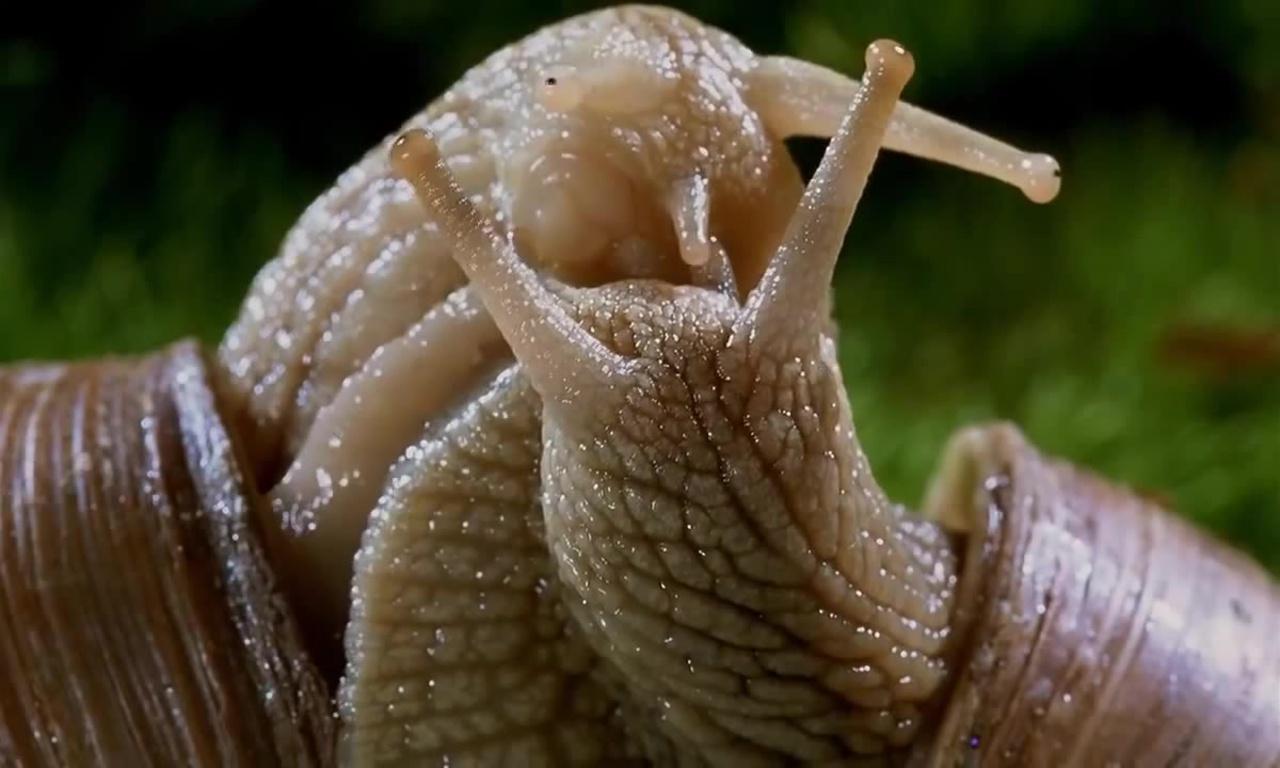 Сбор и выращивание улиток