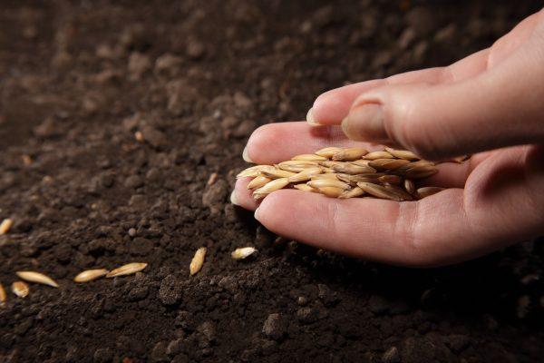 Качественные семена и рассада с доставкой