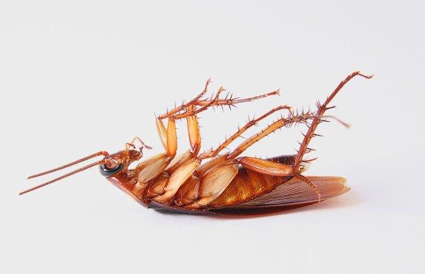 Уничтожьте всех насекомых в Вашей доме