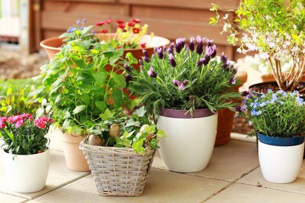 Секреты ухода за домашними растениями