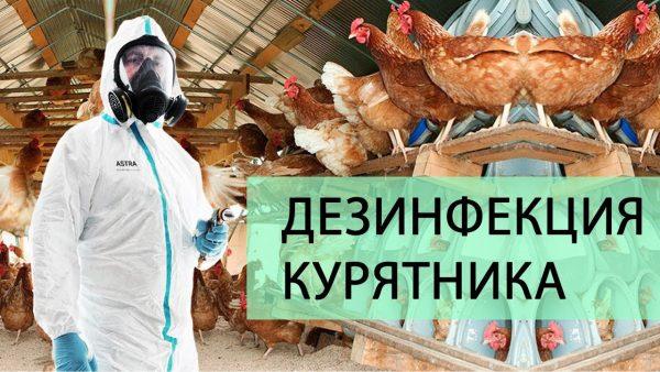 Дезинфекция курятников в Москве